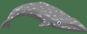 Gray Whale Cartoon