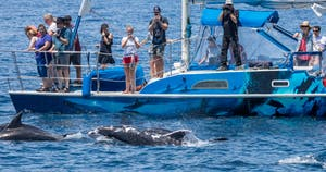 Bottlenose Dolphin called Patches swims next to catamaran DolphinSafari