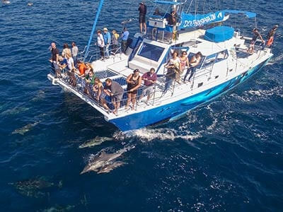 capt. daves dolphin & whale safari coupon