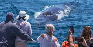 Fin whale heading right at passengers on the bow of Capt. Dave's catamaran