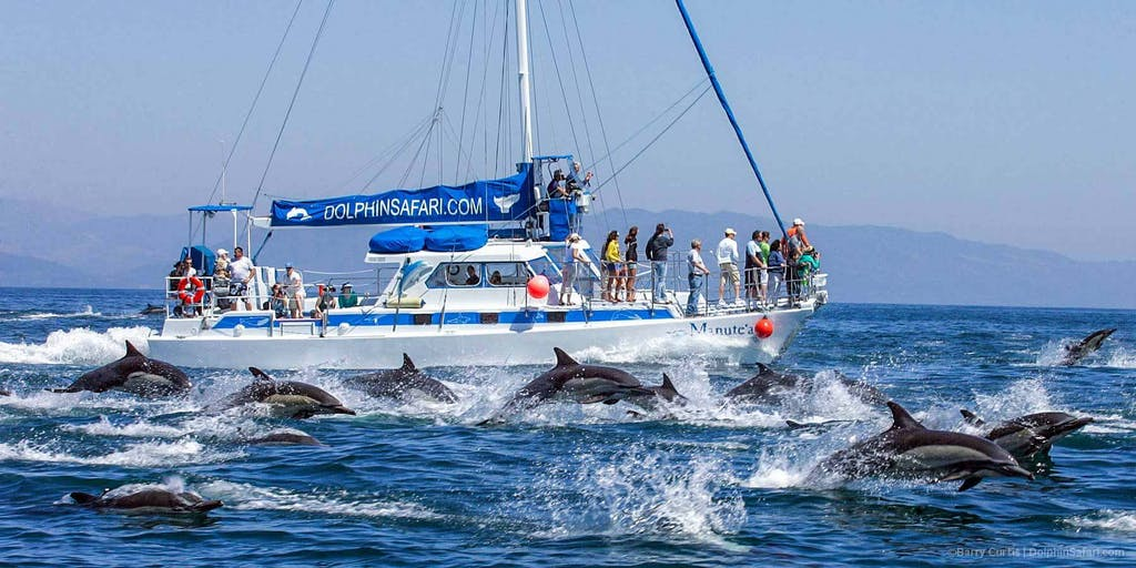 Capt. Dave's catamaran Manute'a and a dolphin stampede