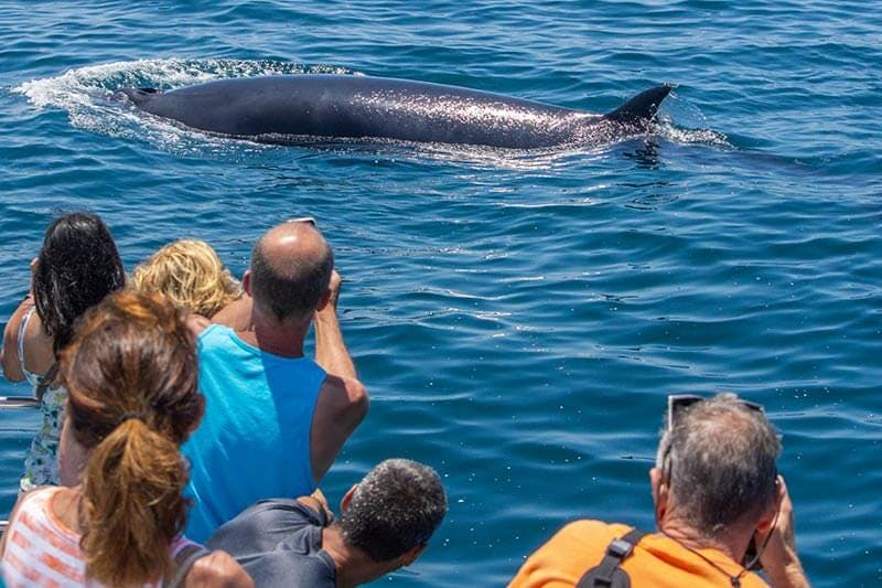 Capt. Dave's guests get up close with a minke whale