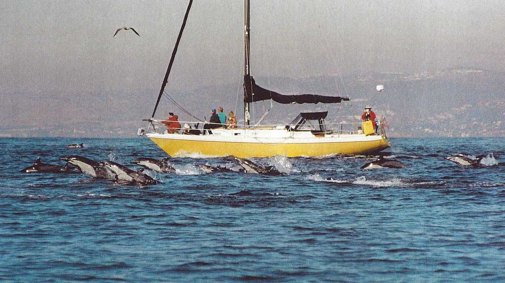 Capt. Dave's former yellow sailboat surrounded by dolphins