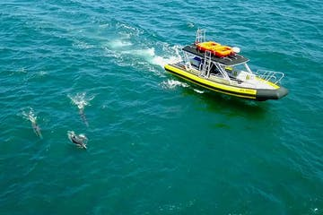 Zodiac Boat AllsWell surrounded by dolphins off Dana Point, California