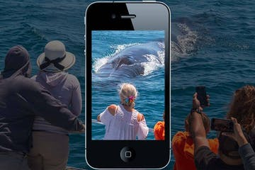 People whale watching through the view of a smartphone