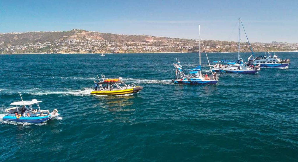 Drone image with 5 of Captain Dave's boats in front of Dana Point coastline.