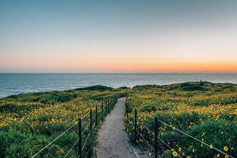 Trail at Dana Point Headlands heading towards the ocean during sunset