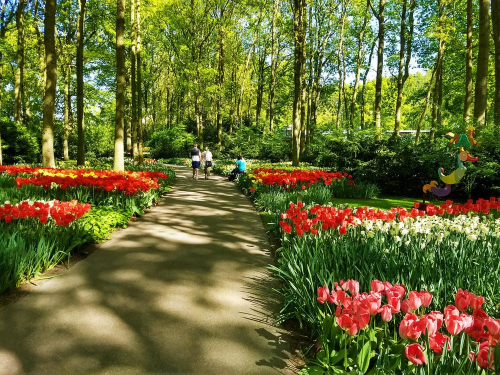 a colorful flower garden in front of a forest
