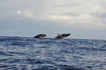 Two Whales surfacing