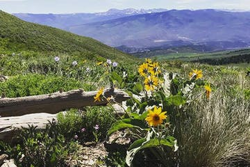 Colorado-Wildflowers-and-Mountains