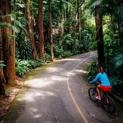 Jungle-Bicycle-Tour-of-Rio