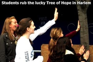 Tree of Hope #4