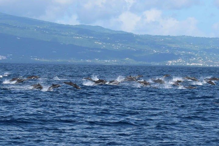 Whale Watching in Guadeloupe