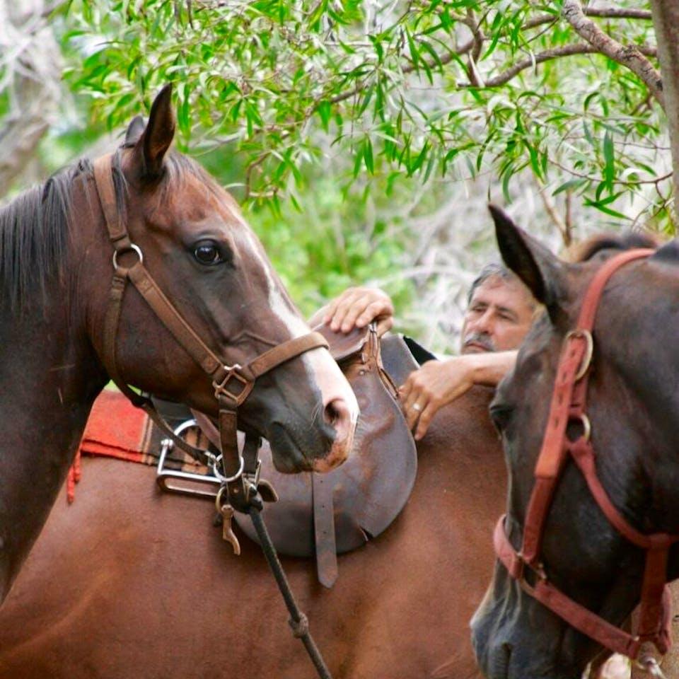 Spirit, a Happy Trails Hawaii horse