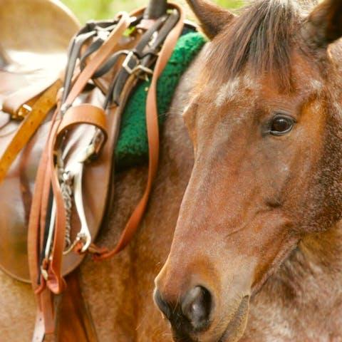 Rascal, a Happy Trails Hawaii horse