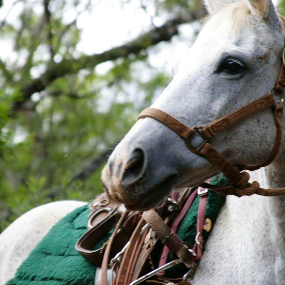 Jewel, a Happy Trails Hawaii horse