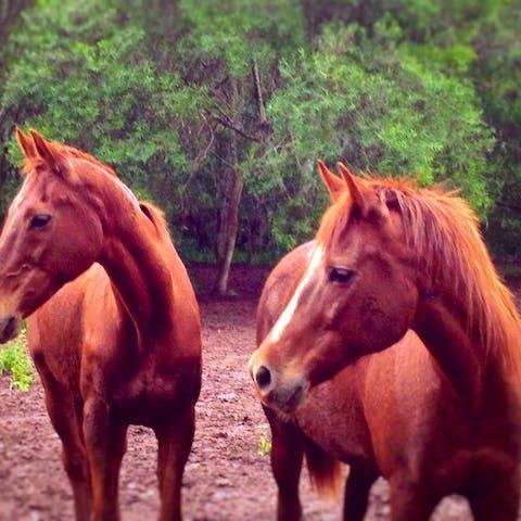 Happy Trails horses Ginger & Carlita