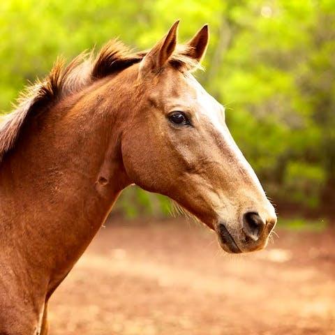 Sky, a Happy Trails Hawaii polo horse