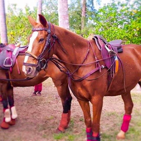 Sierra, a Happy Trails Hawaii polo horse