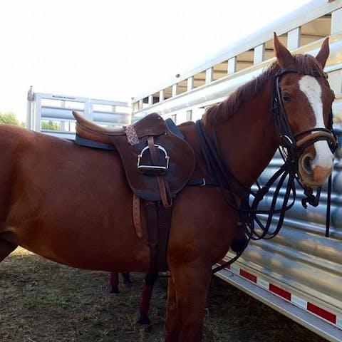 Lola, a Happy Trails Hawaii polo horse