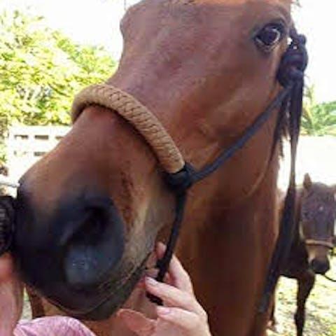 Jet, a Happy Trails Hawaii polo horse