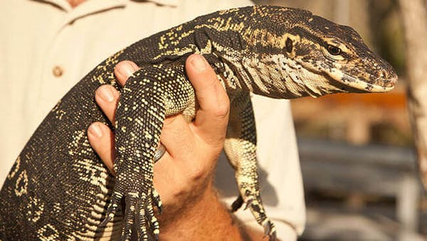 Everglades Exhibits | Sawgrass Recreation Park