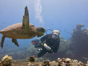 Private Maui scuba diver with professional neutral buoyancy control near a sea turtle at Mala Wharf.