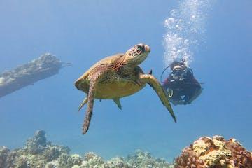 Maui scuba diving with a sea turtle at Mala Wharf.