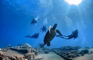 Scuba divers find turtles at Mala Wharf in Maui.