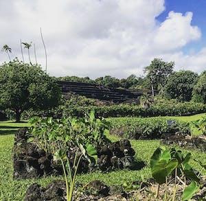 Kahanu Garden is Hawaiian-owned.