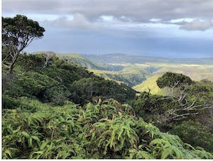 Mauna Kahalawai Watershed is Hawaiian-owned.