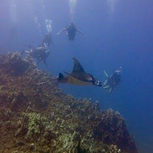 Maui diving with manta ray at Honolua Bay.