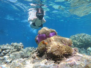 Snorkeling with Molokini Crater's beautiful coral reef and marine animals