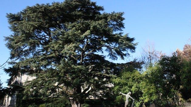 Lucca-Botanical-Garden-Tour