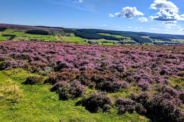 Afternoon & Evening in the Moors