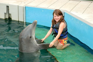 little girl with dolphin