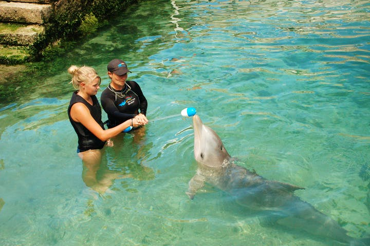 girl and trainer training dolphin