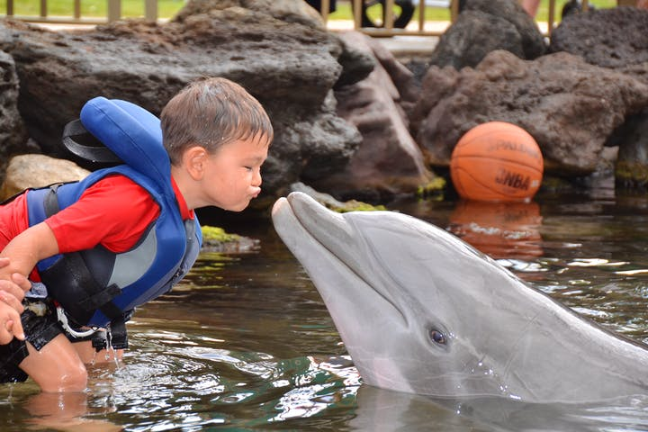 little boy kissing dolphin