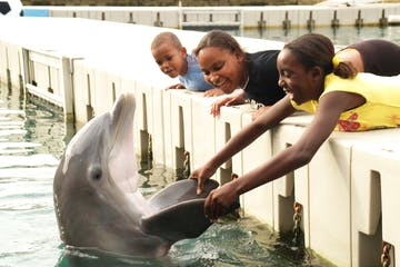 kids on dock with dolphin
