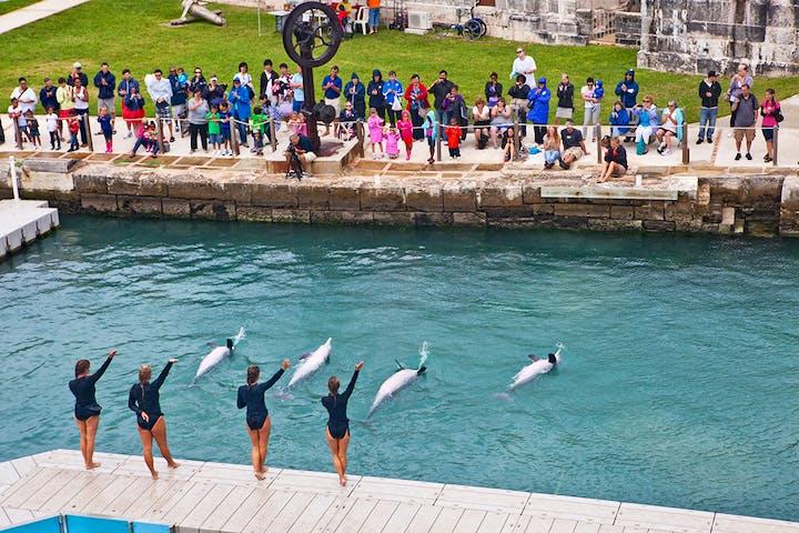 dolphin quest bermuda show