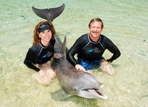 Dolphin Quest relationship between humans and dolphins
