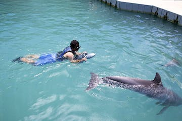 person with water scooter and dolphin