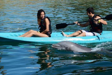 people kayaking with dolphin