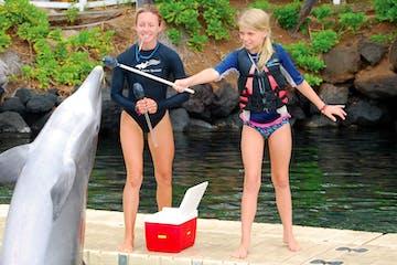 people training dolphin