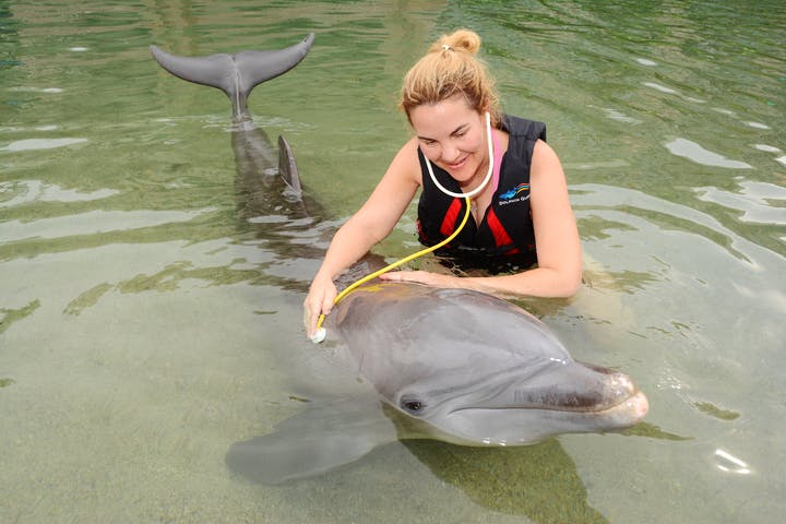 girl with stethoscope and dolphin