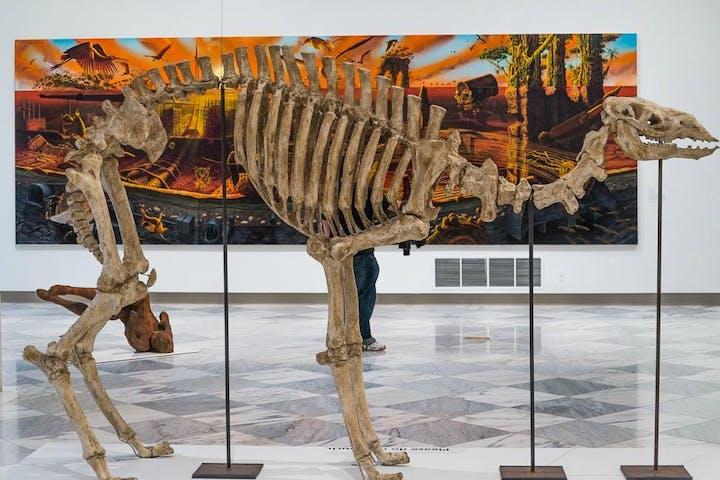 Smithsonian DC Insider Tours
