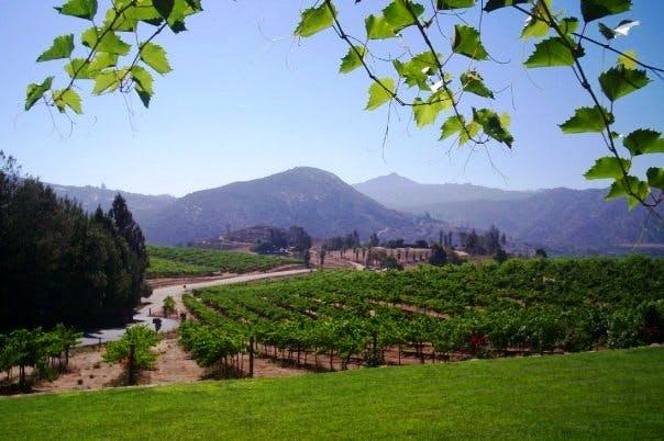 wineryscene