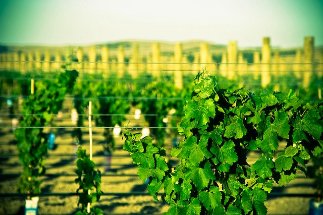 lajolla wine tours august
