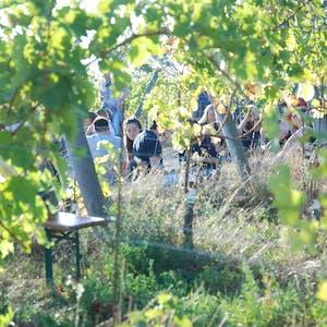 vienna wine walking day