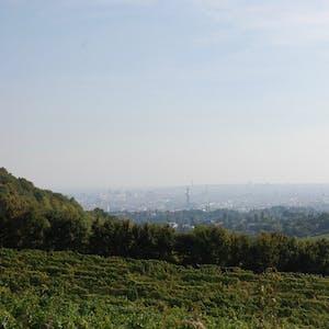 views over vienna vineyards